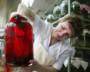 AN EXPERT INSPECTS LEECHES AT THE INTERNATIONAL MEDICAL LEECH CENTRE NEAR MOSCOW.