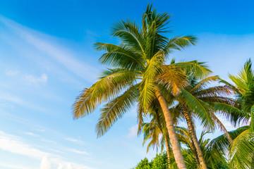 Beautiful tropical Maldives island with palms tree around .