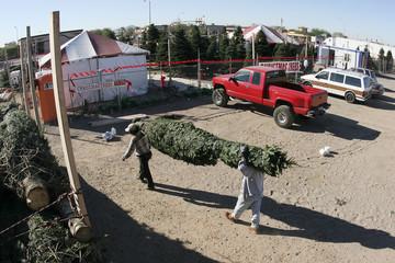 Day laborers unload Christmas trees in Scottsdale, Arizona