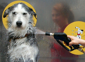 Husky mongrel Smilla is washed at Germany's first dog washer in Hamburg.