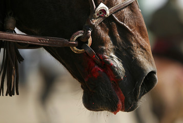 A horse bleeds out of his mouth during a game of buzhkashi on the outskirts of Kabul