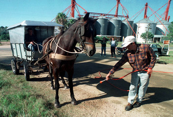 CATTLE RANCH OWNER FUMIGATES A HORSE WITH ACETIC ACID TO PREVENT THE RISK OF FOOT AND MOUTH DISEASE.