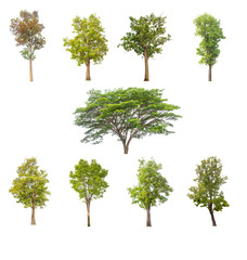 tree isolated,tree on white background,collections tree isolation.