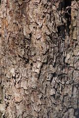 the bark of the tree