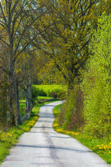 Swedish rural road with blooming flowers during spring