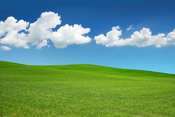 Canvas Prints Hill green meadow under a spring sky with white clouds.