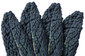 Leaves of cavolo nero or lacinato kale isolated on white