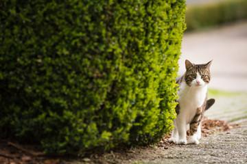 Eine Katze auf dem Weg nach Hause