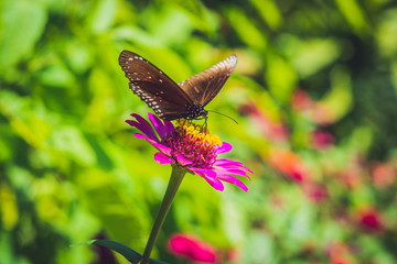 Butterfly on a tropical flower in a butterfly park
