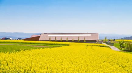 Großer Bauernhof am Rapsfeld