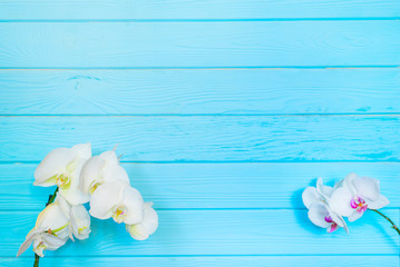 White orchid ( phalaenopsis flower) on blue wooden background. Floral concept. Natural composition. Close up. Top view