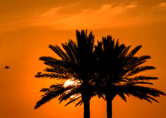 Orange sunset sun and birds flying palm trees