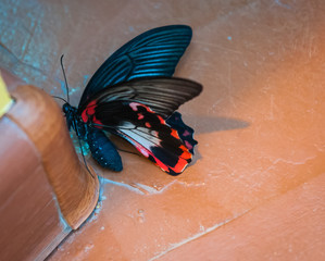 Fotobehang Vlinders in Grunge Beautiful tropical baterfly in it's natural habitat