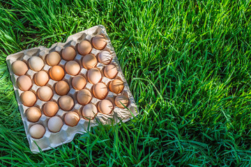 eggs. many eggs in trays on the grass
