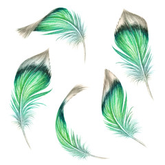 watercolor illustration, green feather collection, easter clip art set, tribal assorted design elements, isolated on white background