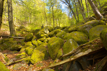 Big granite stones in a forest valley.