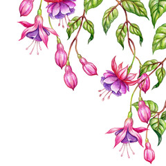 watercolor floral botanical illustration, green leaves, wild garden pink fuchsia flowers, isolated on white  background