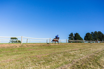 Race Horse Rider Running Training Track