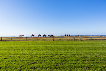 Race Horses Riders Training Track Landscape