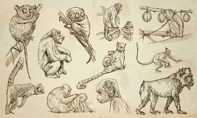 MONKEYS - An hand drawn vector pack, line art