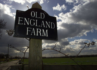 A FARM IN ESSEX NEAR LITTLE WARLEY IN FOOT-AND-MOUTH EXCLUSION ZONE.