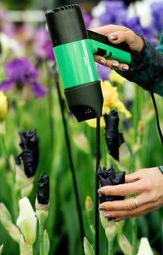 Britains Butt uses hairdryer to help irises bloom at Chelsea Flower Show in London