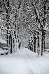 A snow covered sidewalk flanked by dormant trees on both sides.