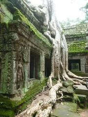 Temple de Ta Prohm à Angkor (Cambodge)