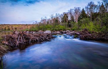 Water flows gently through a broken beaver dam at dusk