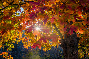Sun shining through autumn leaves in Brown County State Park