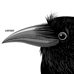 Vector portrait of a black raven