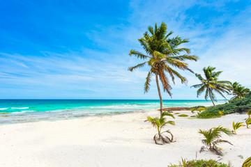 Paradise beach with beautiful palm trees - Caribbean sea in Mexico - Riviera Maya