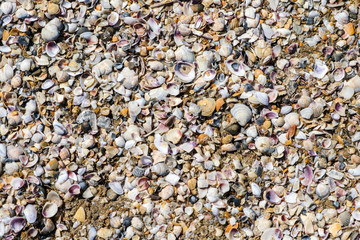close up beautiful background and texture of nature sea shell pattern
