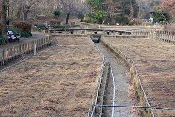 Dead flower garden in winter