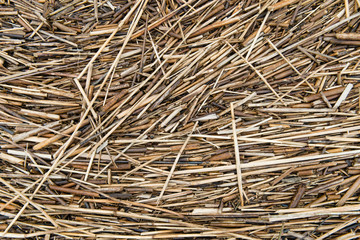 Natural reed, background