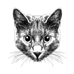 cat breed Russian blue face sketch vector black and white drawing