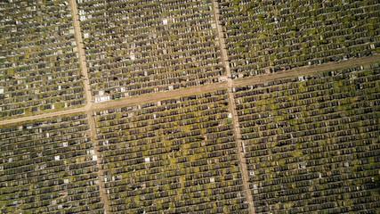 Jewish Cemetery, London. Gravestones and cemetery aerial view