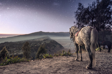 Horse and Village at Dusk - Bromo Volcano Indonesia
