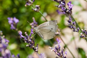 butterfly in summer