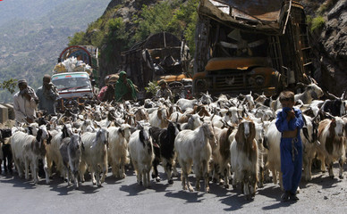 Residents walk their goats past destroyed vehicles along a mountain pass through in Buner district