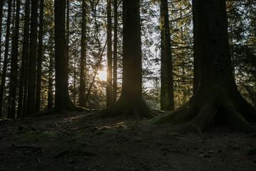 Beautiful forest on the  Mount Floyen, Bergen, Norway