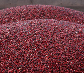 Cranberries are seen at the Atoka farm in Manseau