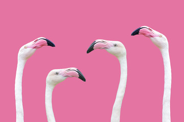 an flamingo head