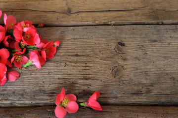 Keuken foto achterwand Roses Beautiful flowers on a wooden old table