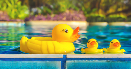 Yellow rubber duck float in water