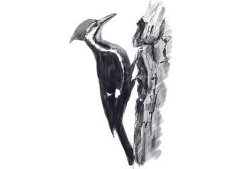 Illustration of woodpecker. Digital painting.