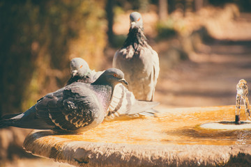 Pigeons on a bird fountain in a park. Artistic retro edit.