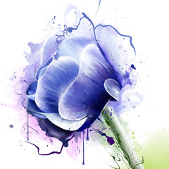 Anemone, or an Anemone is a genus of perennial flowering plants of the Buttercup family (Ranunculaceae)