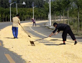 Farmers lay out corn along a road near the village of Da Shi Men, northeast of Beijing
