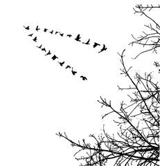 illustration, silhouette of flying birds